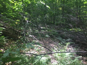 Downed trees across the trail.